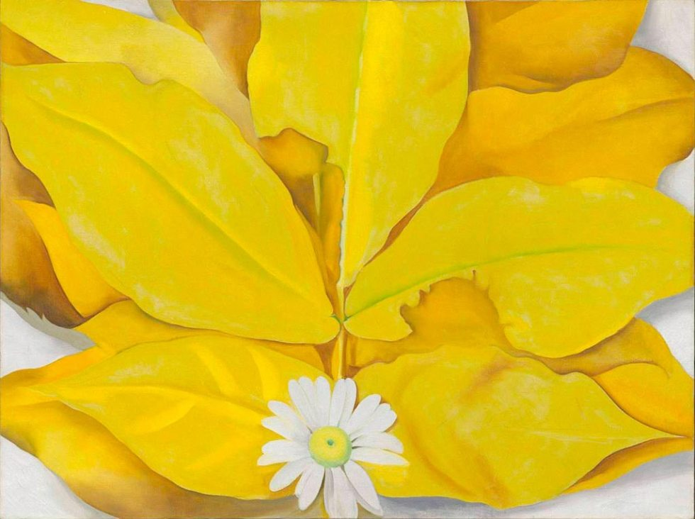 yellow-hickory-leaves-with-daisy-1928.jpg